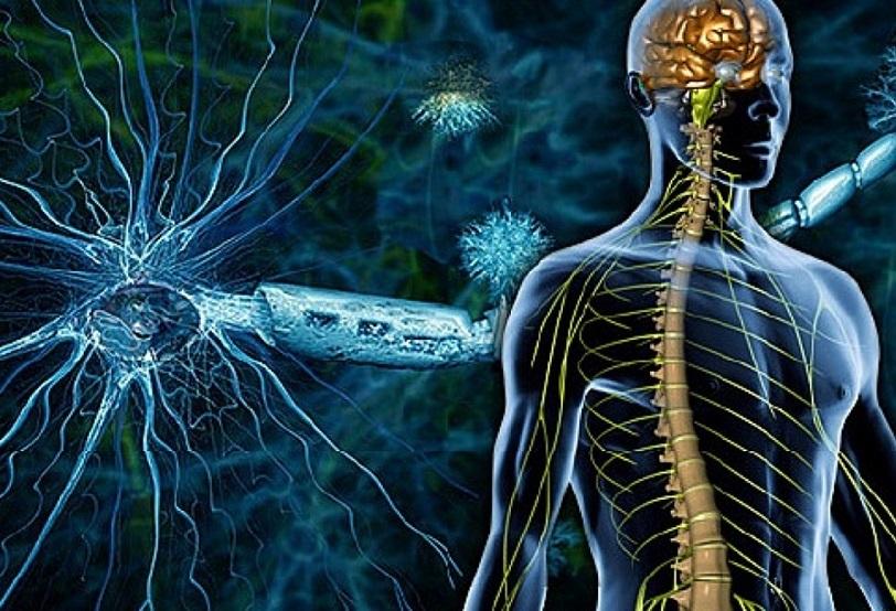 سلسلة كيف يعمل الجسم البشري.. كل شيء عن الجهاز العصبي عند الانسان
