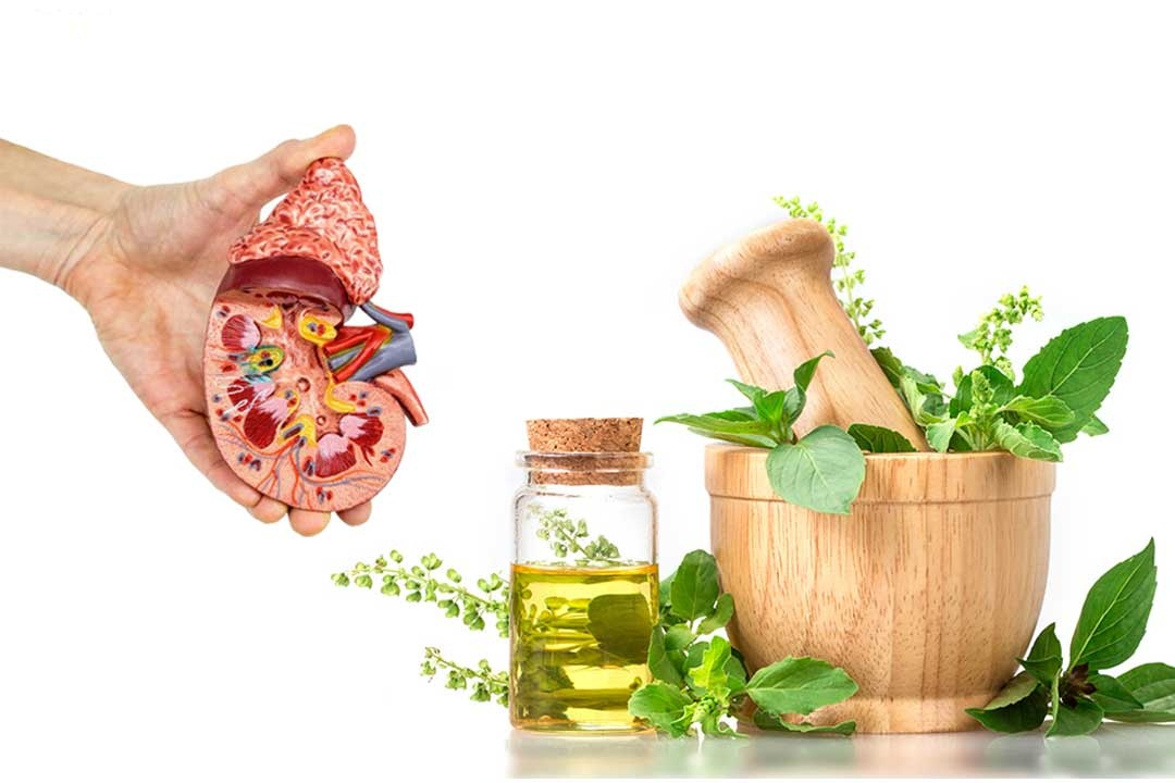 علاج أمراض الكلى بالأعشاب