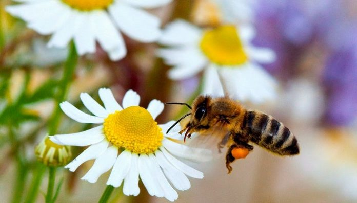 فوائد النحل وأهميته