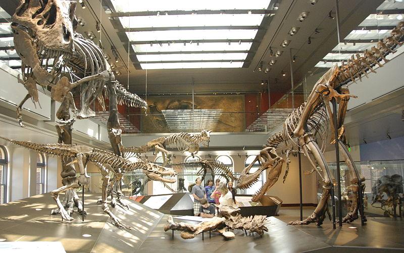 مجموعة من الهياكل العظمية من أعمار مختلفة في متحف التاريخ الطبيعي في لوس أنجلوس.
