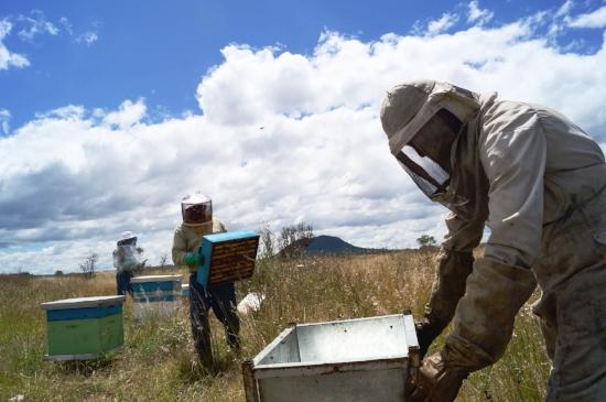 من خلال دعم تربية النحل ، نتعاون بشكل مباشر في رعاية النحل