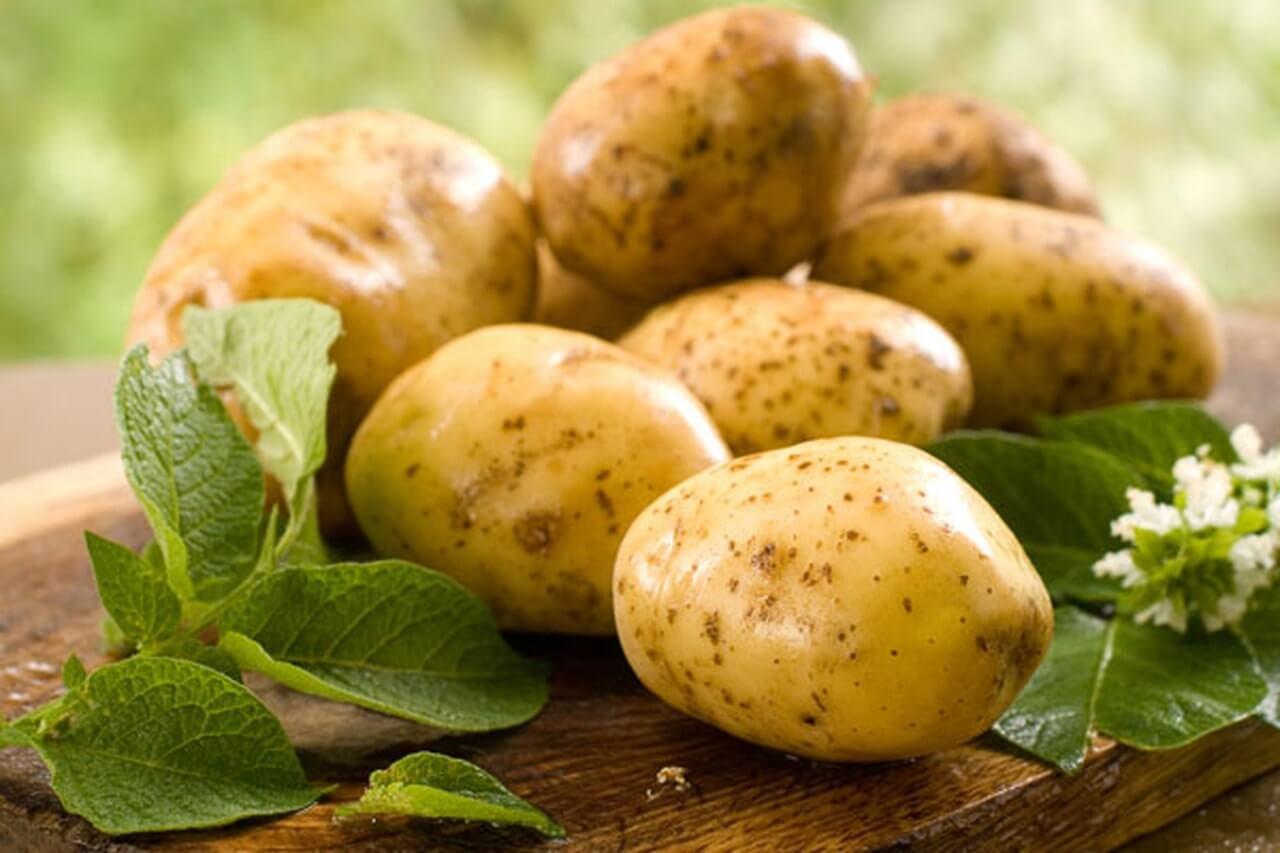 نبات البطاطس