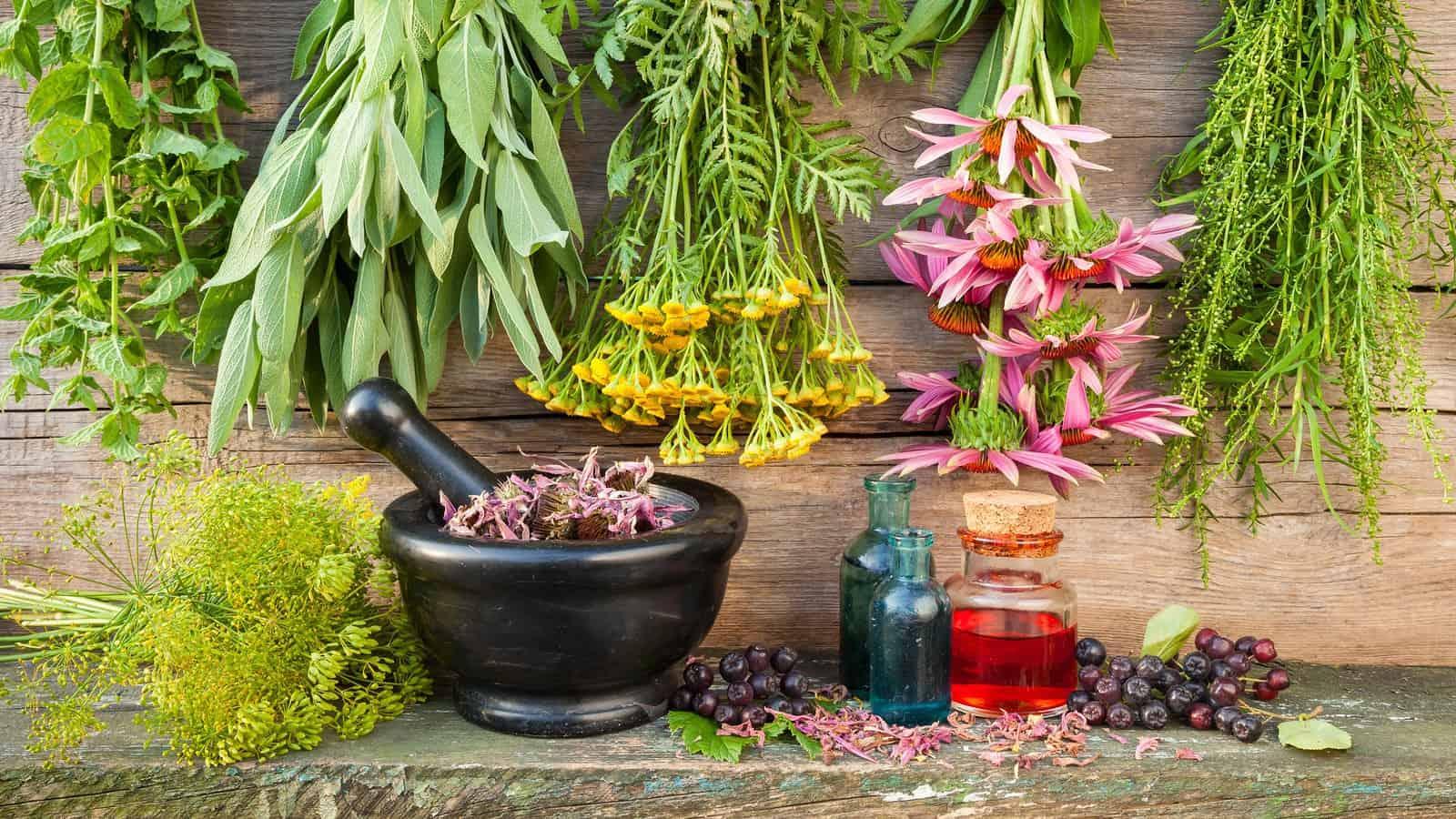 العلاج بالأعشاب الطبيعية