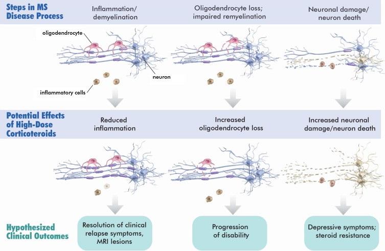 Neurons Figure Final