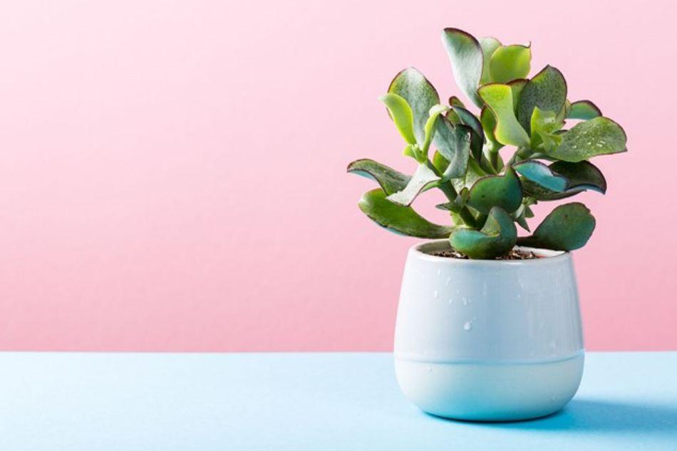 أفكار هدايا النباتات للفتيات