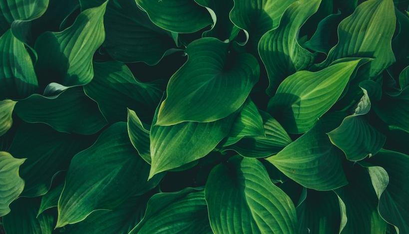 أجزاء النبات