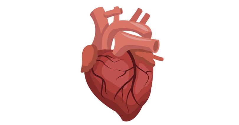القلب - الرجفان البطيني