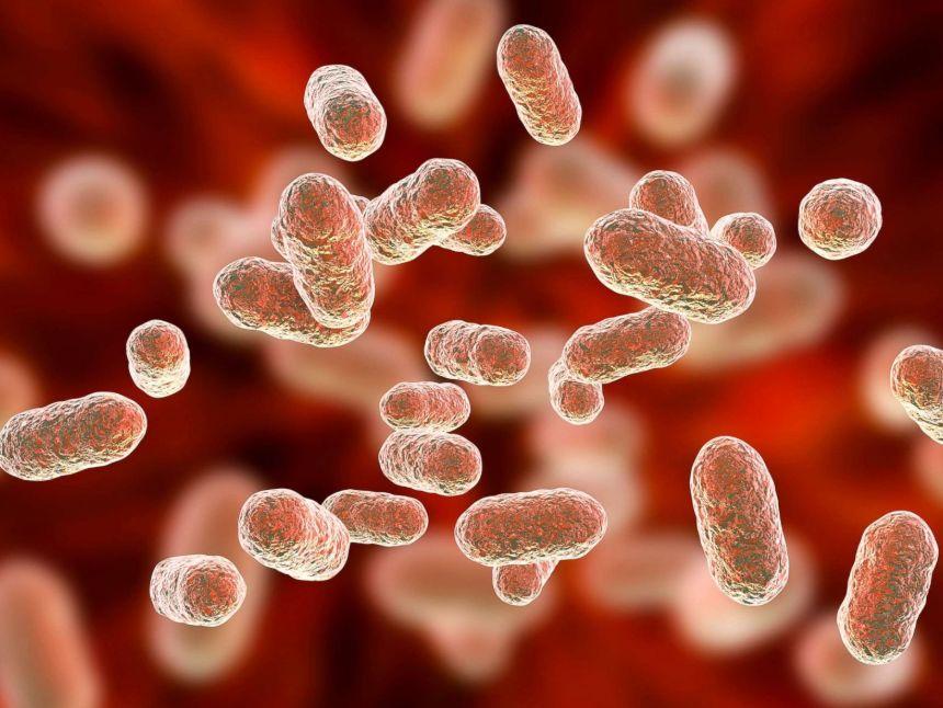 كائنات ضئيلة ولكن لا تستهين بها لان أعراض نقص البكتيريا النافعة قد تعاني منها