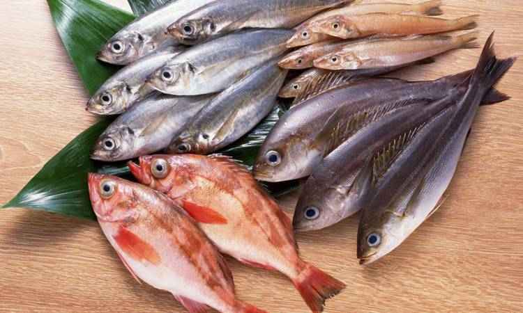 أهم أنواع الأسماك الصالحة للأكل وخصائصها الغذائية مجلتك