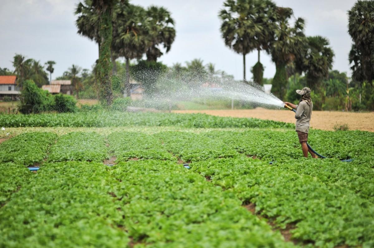 الزراعة المروية
