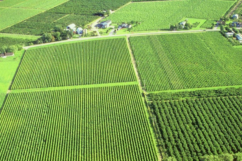 الزراعة المكثفة