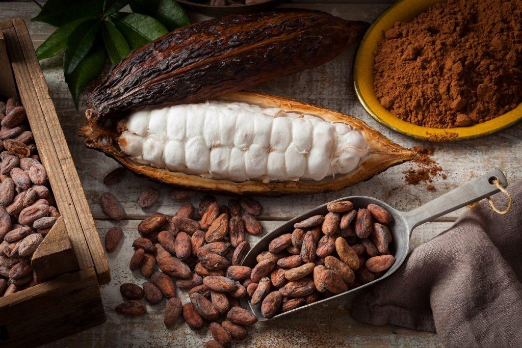 تجفيف ثمار الكاكاو