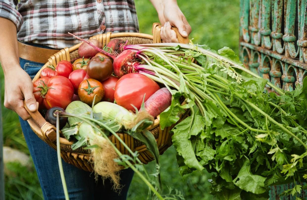 الزراعة-العضوية-3