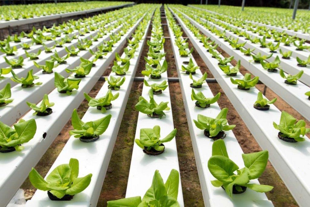 الزراعة المائية1