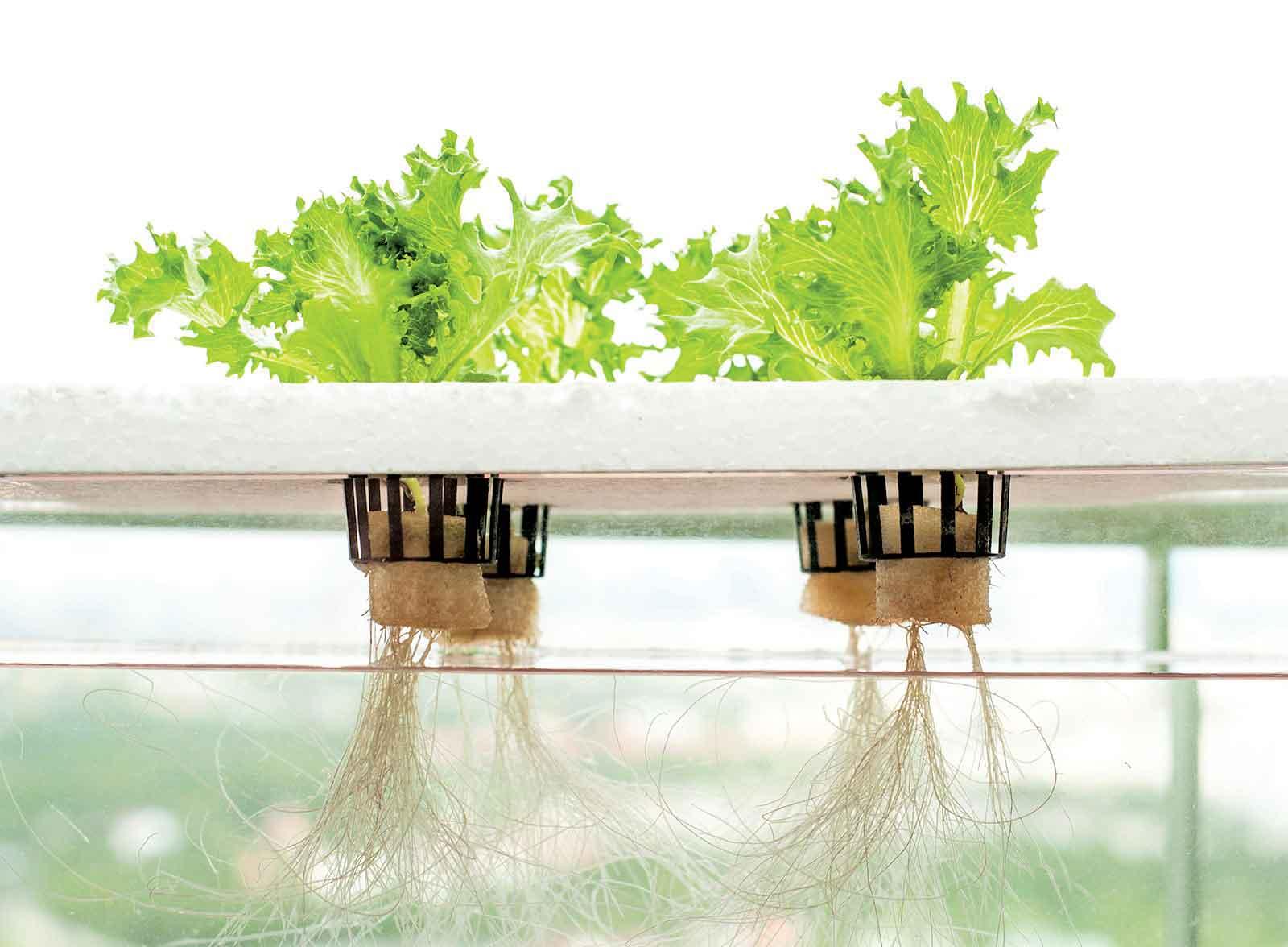 الزراعة-بدون-تربة