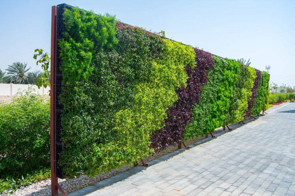 الزراعة-على-الحائط