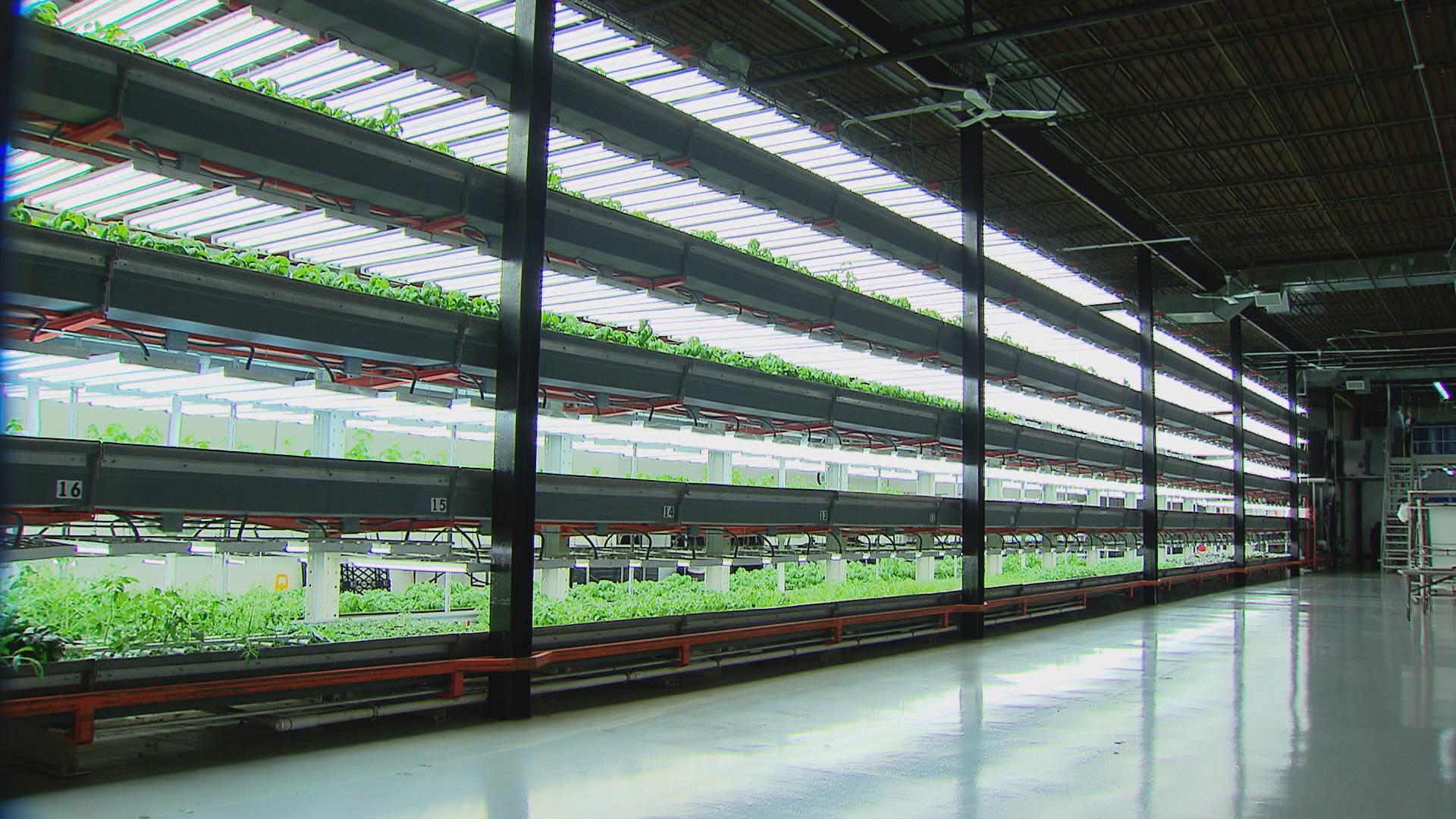 تسويق-منتجات-الزراعة-المائية