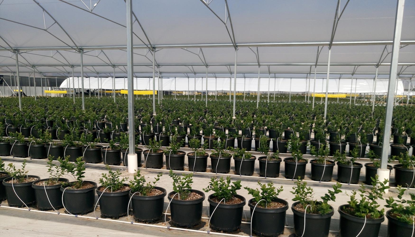 زراعة-اشجار-الفاكهة-بتقنية-الزراعة-المائية