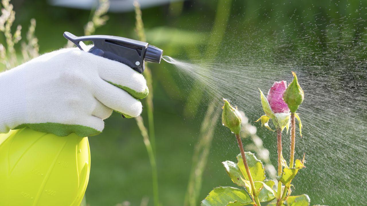 كيفية-صنع-مبيدات-فطرية-في-المنزل
