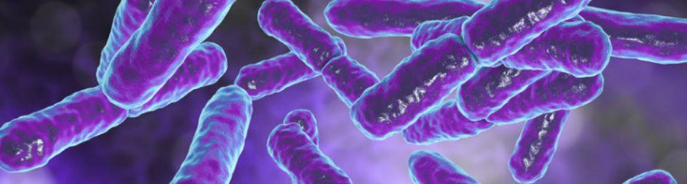 9 – مكملات البروبيوتيك أو الأطعمة التي تعزز البكتيريا المفيدة