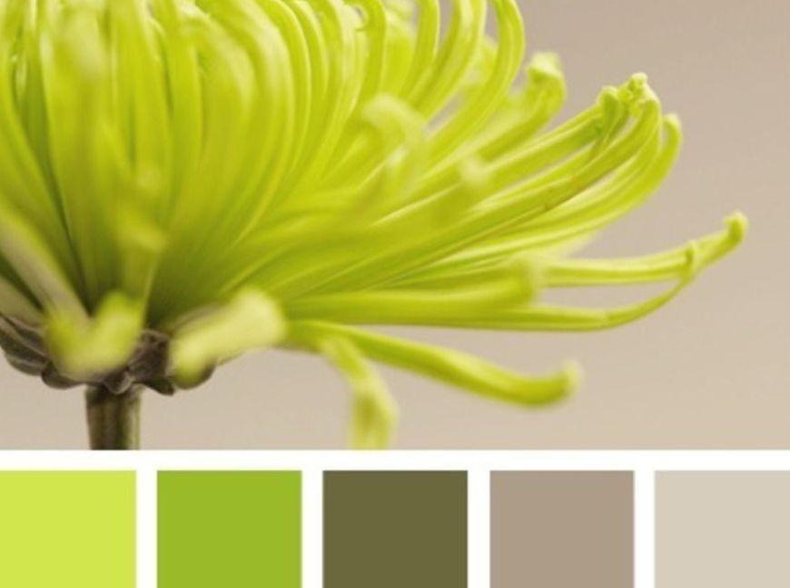 الأخضر العشبي