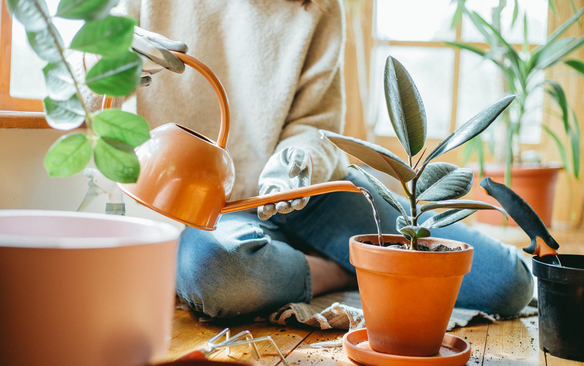 طرق-العناية-بالنباتات-الداخلية