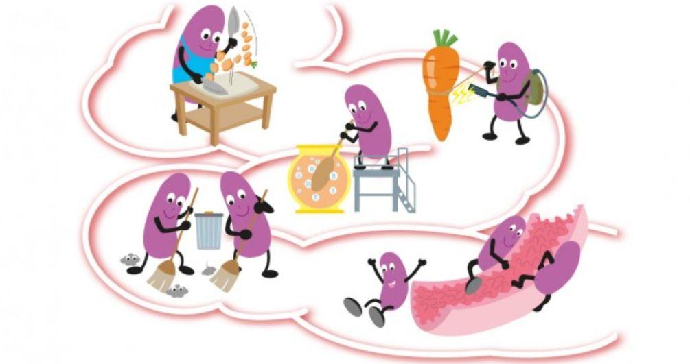 فوائد البكتيريا النافعة للأمعاء