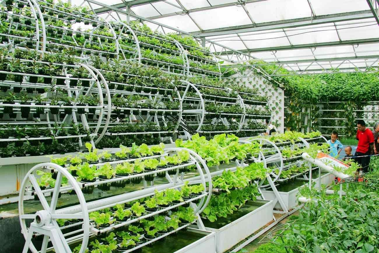 أسرار-مبتكرة-للزراعة-المائية