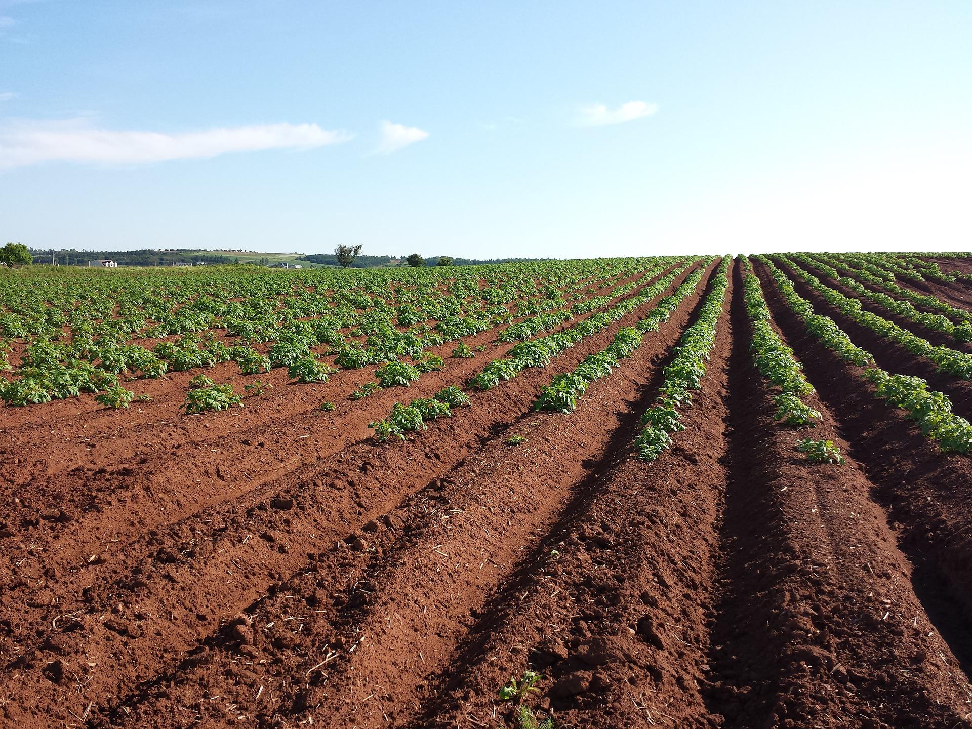 أنواع-الترب-الصالحة-للزراعة