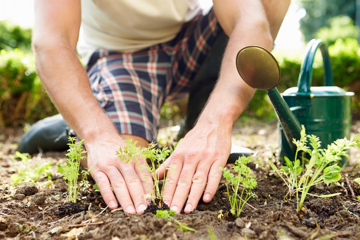 انشاء-حديقة-في-المنزل