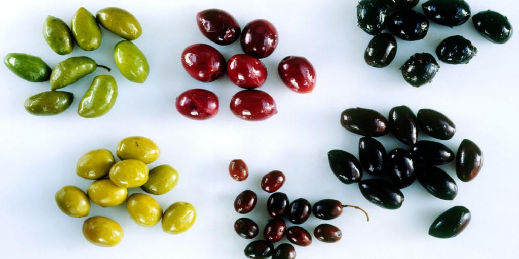 أنواع الزيتون