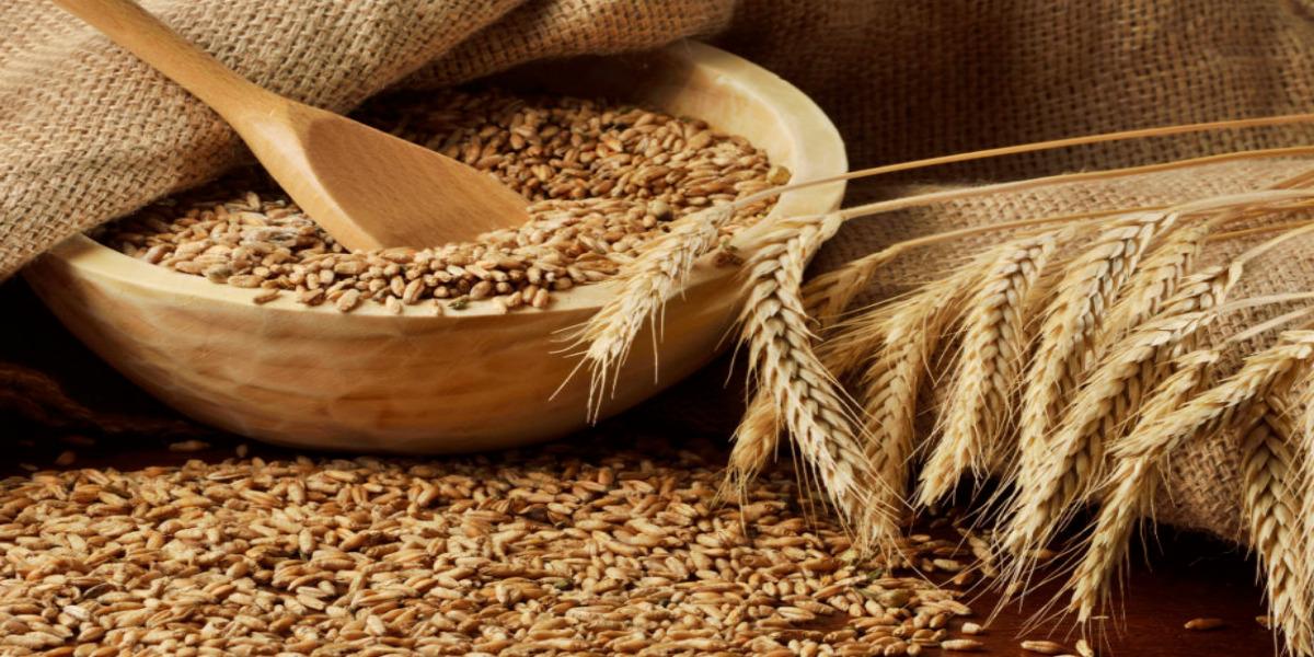 أنواع القمح