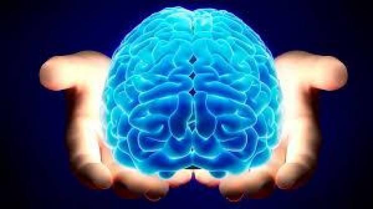 الدماغ والنوم