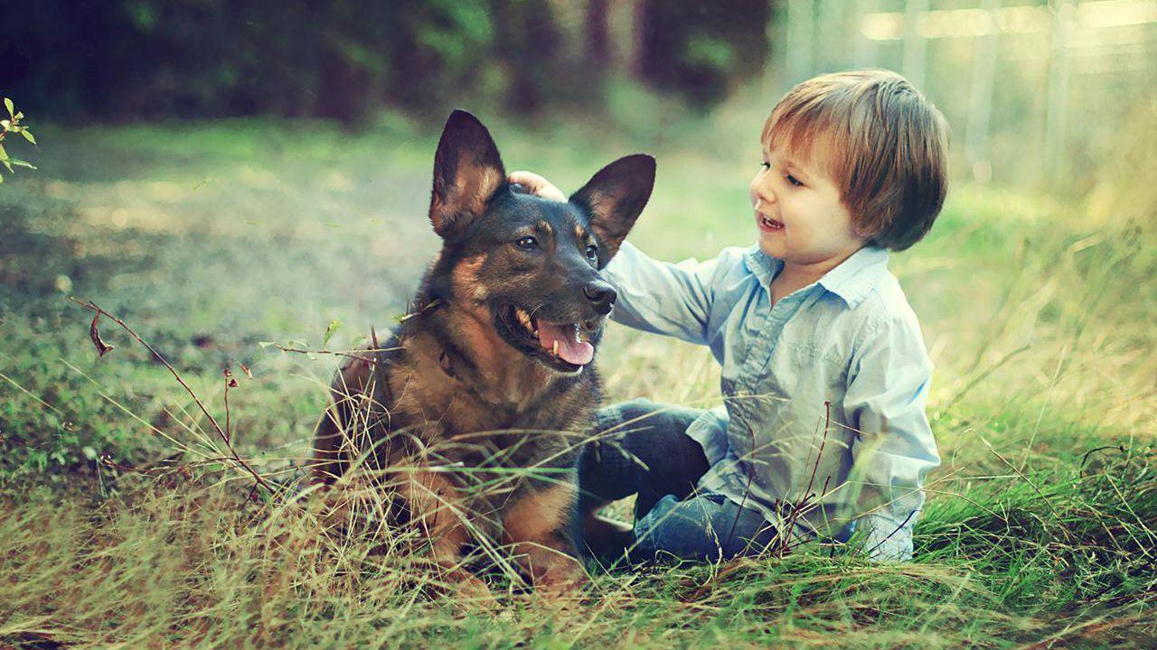 حيوان أليف مع طفل