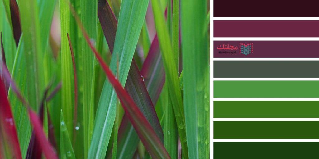 10 – اللون الزيتي مع البنفسجي الغامق