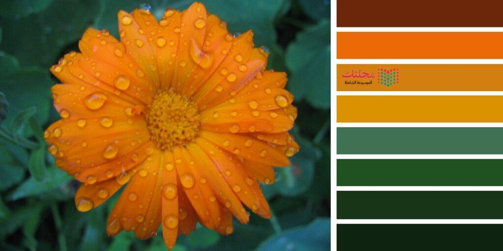 19 – الزيتي مع البرتقالي