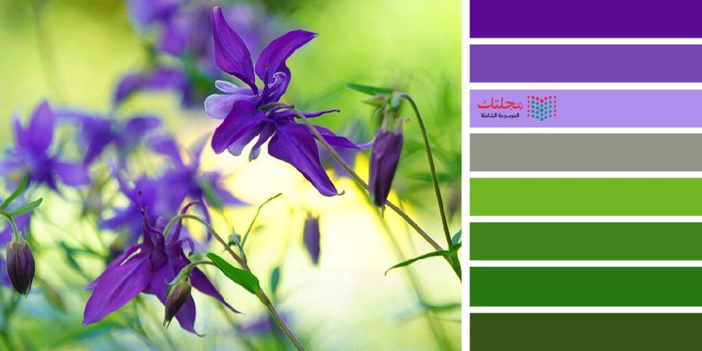 2 – اللون الزيتي مع البنفسجي