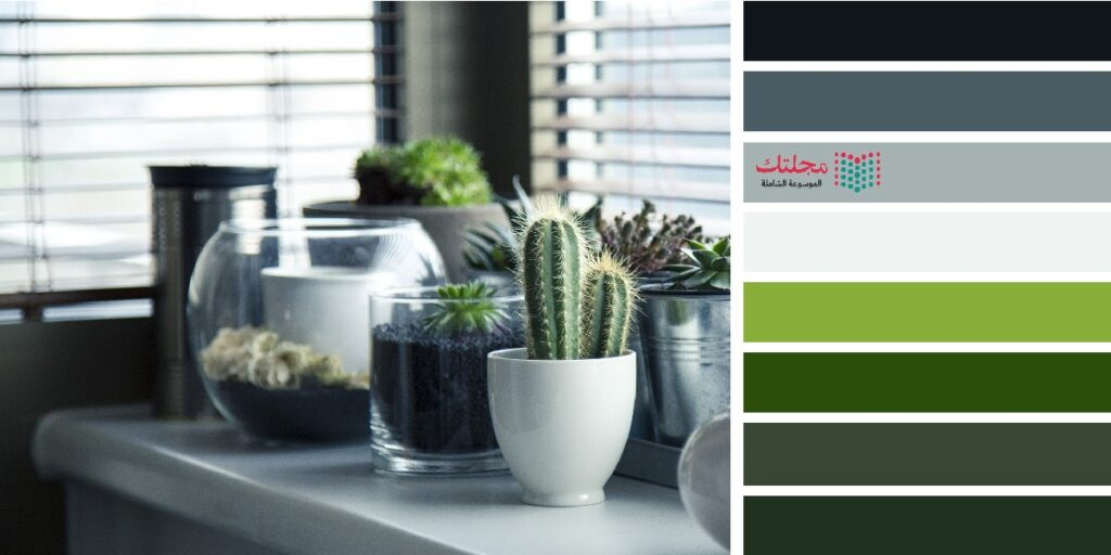 3 – اللون الزيتي مع الأبيض والرمادي والأخضر العشبي