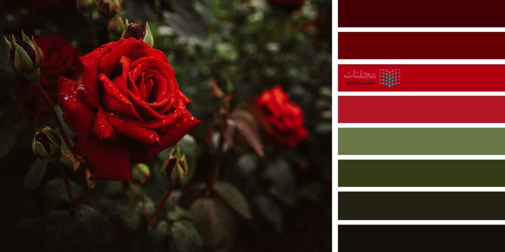 9 – الزيتي مع الأحمر الخمري أو الأحمر القوي