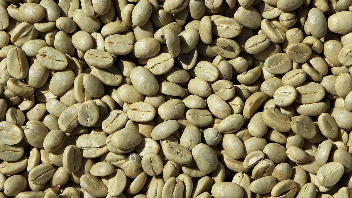 القهوة الخضراء على الريق ... بين الفوائد والأضرار والطريقة والتوقيت