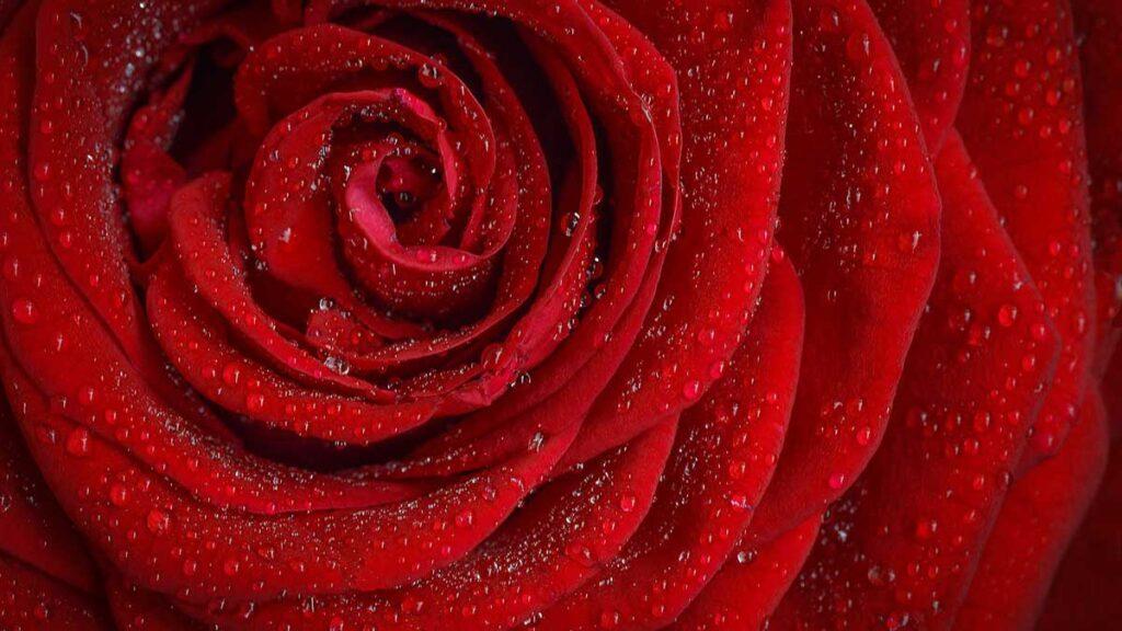 1 – اللون الأحمر Red