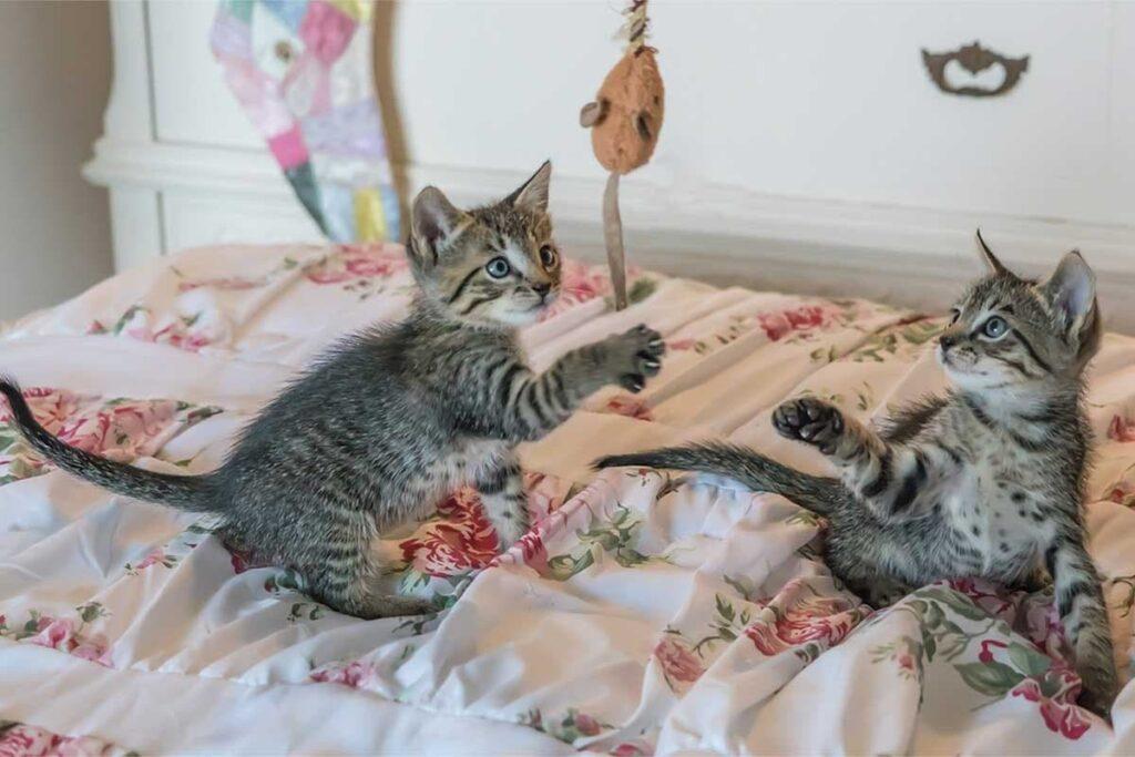 قطة تلعب بالحبل