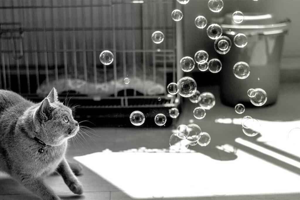 قطة يلفت انتباهها لعبة الفقاعات