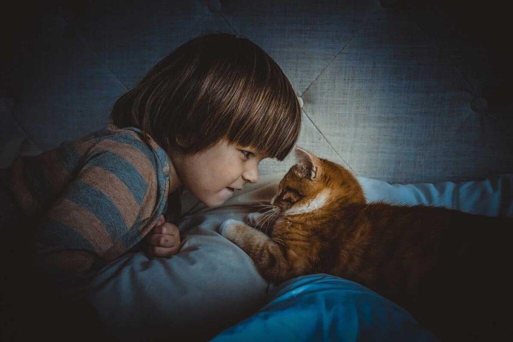 التقرب من القطة
