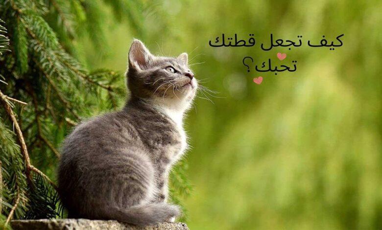 كيف تجعل القطة تحبك